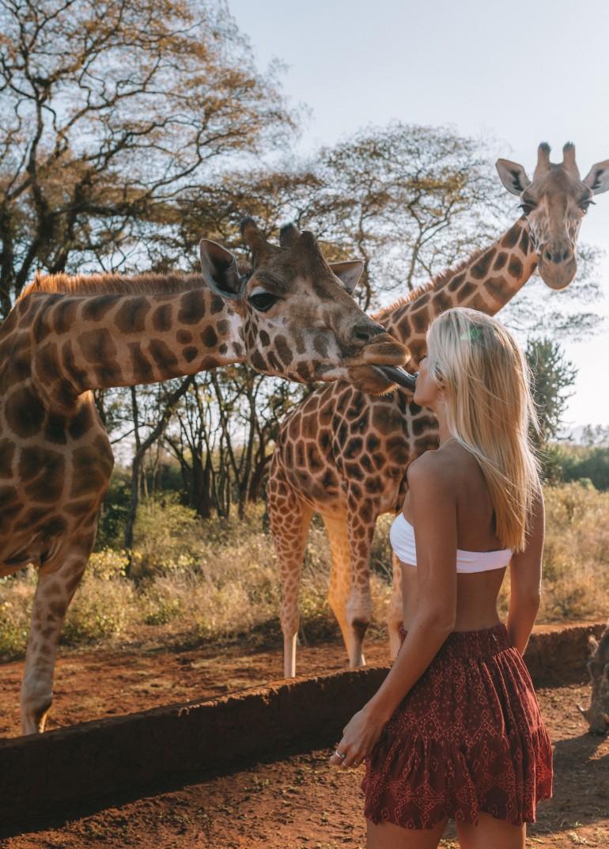 giraffekissblog